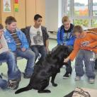 Therapiehund in der Schule